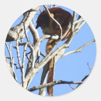 Pegatina del canguro de árbol