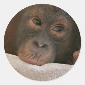 Pegatina del chimpancé del bebé