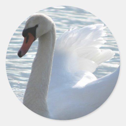 Pegatina del cisne de la trompeta