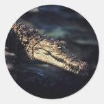 Pegatina del cocodrilo del caimán