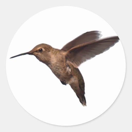 Pegatina del colibrí en vuelo