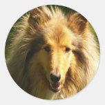 Pegatina del collie del Lassie