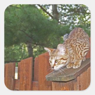 Pegatina del cuadrado del gato de la sabana
