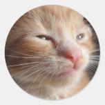 Pegatina del Cuteness del gatito
