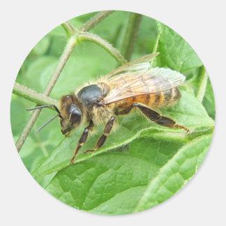 Pegatina del ~ de la abeja de la miel