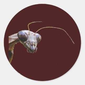 Pegatina del ~ de la mantis religiosa