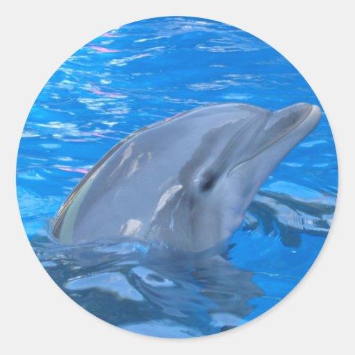 Pegatina del delfín de Bottlenose