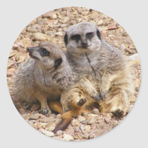 Pegatina del dúo de Meerkat