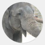 Pegatina del elefante que toca la trompeta