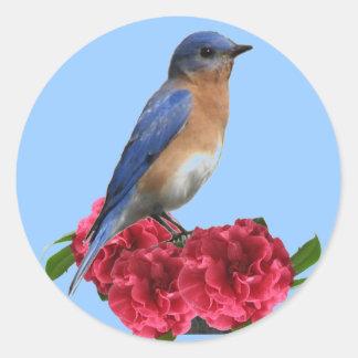 Pegatina del este de la camelia del Bluebird