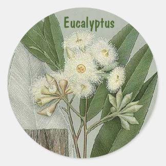 Pegatina del eucalipto