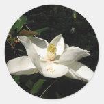 Pegatina del flor de la magnolia