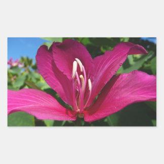 Pegatina del flor del árbol de orquídea