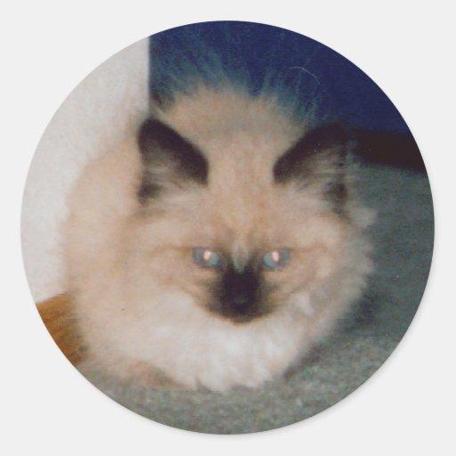 Pegatina del gatito