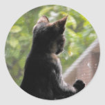 Pegatina del gatito de la concha