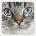 Pegatina del gatito de Ragdoll