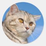 Pegatina del gato de Tabby