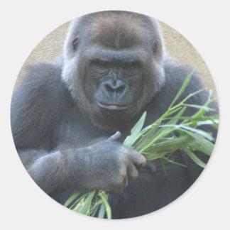 Pegatina del gorila del Silverback