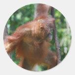 Pegatina del gran mono