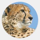 Pegatina del guepardo
