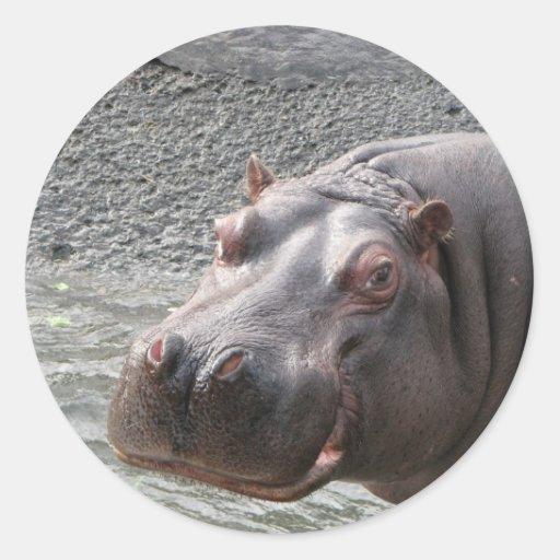 Pegatina del hipopótamo