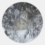 Pegatina del husky siberiano del invierno