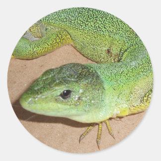 Pegatina del lagarto