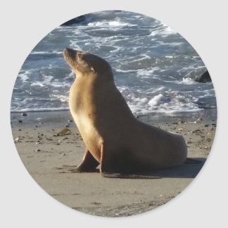 Pegatina del león marino