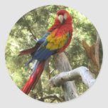 Pegatina del loro del Macaw