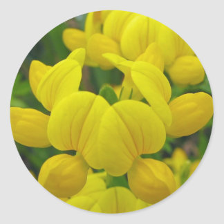 Pegatina del Lupine amarillo