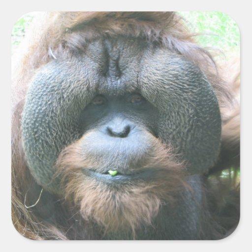 Pegatina del orangután