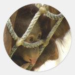 Pegatina del orangután del bebé