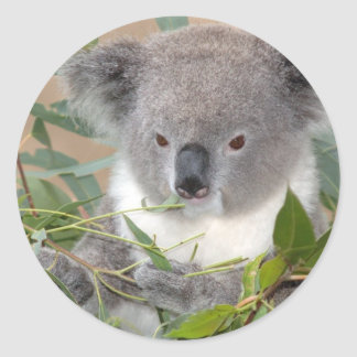 Pegatina del oso de koala