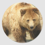 Pegatina del oso grizzly