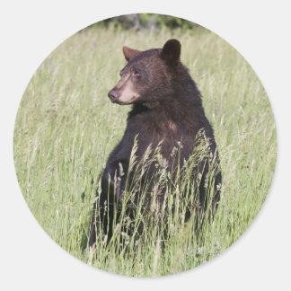 Pegatina del oso negro
