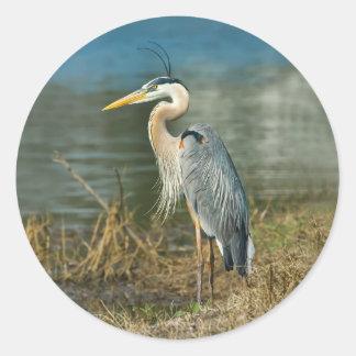 Pegatina del pájaro de la garza de gran azul