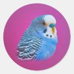 Pegatina del Parakeet