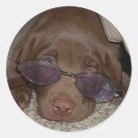 Pegatina del perrito de Labrador del chocolate