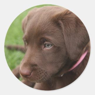 Pegatina del perrito del laboratorio del chocolate