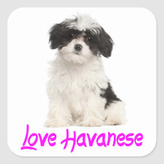Pegatina del perro de perrito de Havanese del amor Pegatina Cuadrada