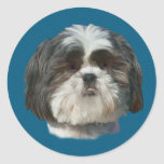 Pegatina del perro de Shih Tzu
