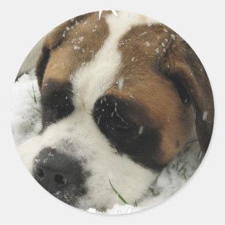 Pegatina del perro de St Bernard
