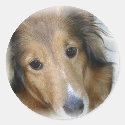 Pegatina del perro del collie