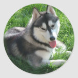 Pegatina del perro del husky siberiano