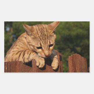 Pegatina del rectángulo del gato de la sabana