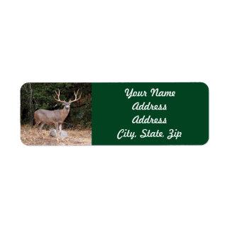 Pegatina del remite de los ciervos etiqueta de remitente