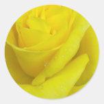 Pegatina del rosa amarillo