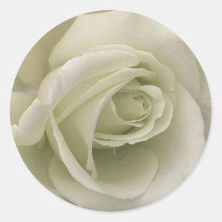 Pegatina del rosa blanco