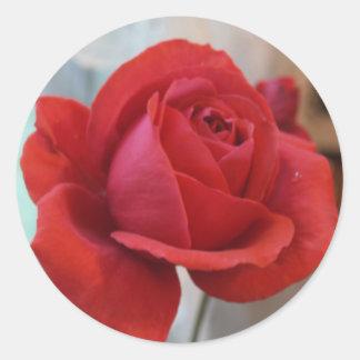 Pegatina del rosa rojo