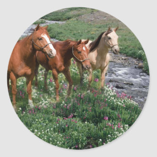 Pegatina del trío del caballo